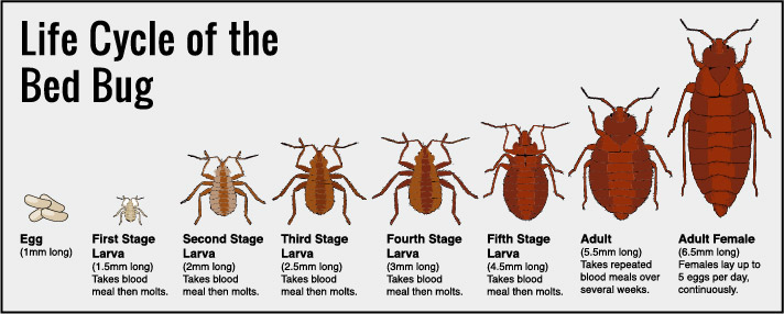 What Are Bed Bugs? Does Your Rental Property Really Have Them?